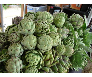GROWERS MARKET - SPRING ARTICHOKES