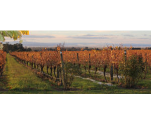 ELSTON VINEYARD AUTUMN